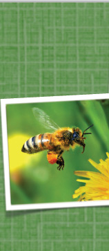 Idlewood Honey Bee
